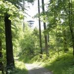 Der Albis-Turm im Wald