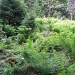 Braunwald: Zauberwald