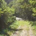 Das alte Bahntrasse der Misox-Bahn