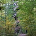 Ein Turm im Walde sich versteckt