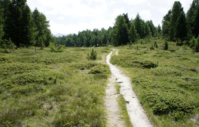 Moosalp – Törbel: Abstieg mit Aussicht