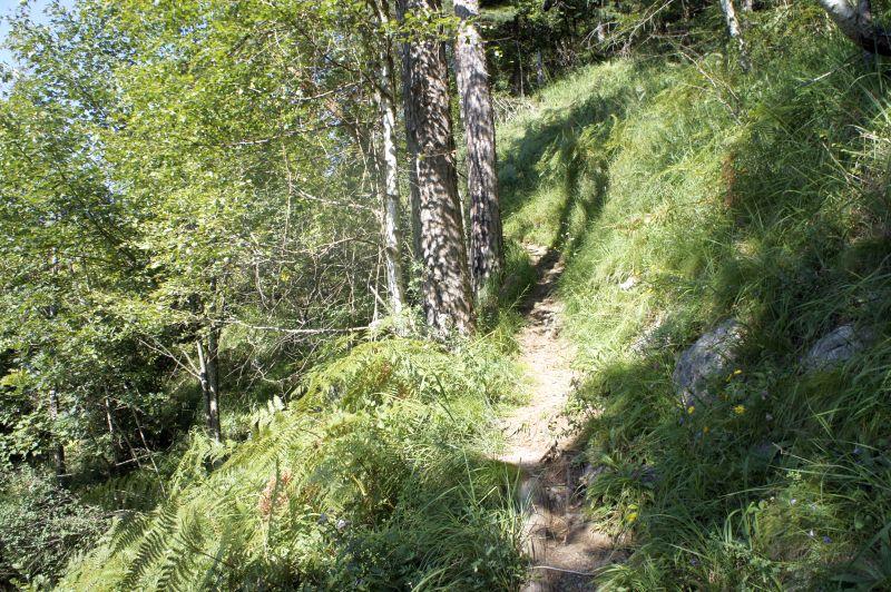 Der Waldstätterweg