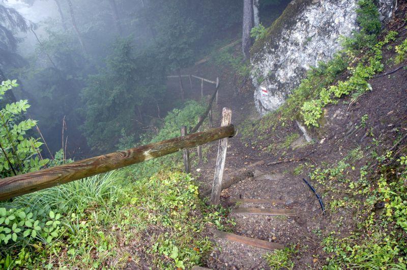 Abstieg in die Molassestufe des Lützelauerwaldes
