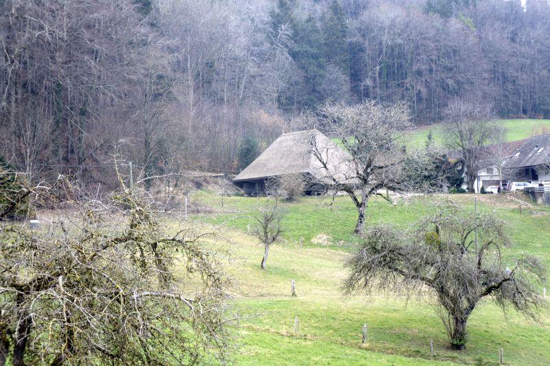 Strohdachhaus Leimbach AG